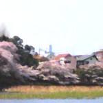大宮公園へ、桜を見てきました